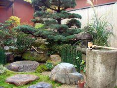 Small Japanese-style garden (tsuboniwa) in the Misuya-Bari store Kyoto Japan.
