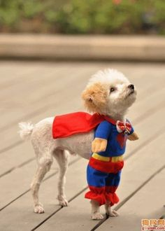 superhero dog at a superhero wedding. too cute