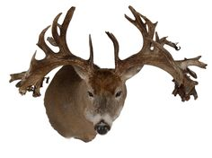 20 Biggest Non-Typical Bucks of All Time Whitetail Bucks, White Tail, Free Range, Taxidermy, Antlers, All About Time, Deer, Moose Art, Hunting