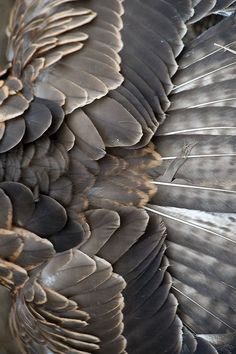 Taupe Feather Textures - natural surface pattern & texture inspiration for bird inspired design TÜY Pattern Texture, Surface Pattern, Texture Design, Surface Design, Natural Forms, Natural Texture, Patterns In Nature, Textures Patterns, Nature Pattern