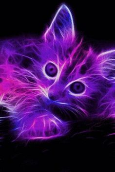 1000 images about neon kittens on pinterest trippy - Neon animals wallpaper ...