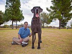 Big George next to owner