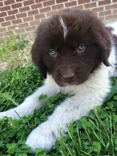 This Newfie baby who needs ALLLLL the puppy kisses.   41 Pictures For When Life Just Sucks