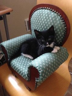 Today, I found a kitten sized chair and, luckily, I had a kitten to put in it.