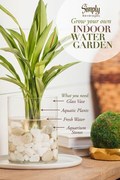Bring the beauty of the outdoors in by creating an indoor water garden. The soothing sounds of water can have a relaxing effect while the greenery can help freshen the air.