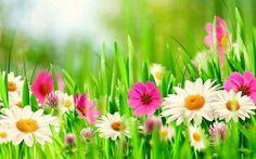 Spring Pictures For Desktop