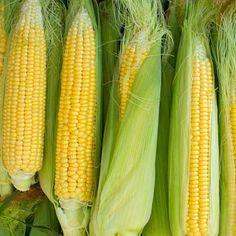 David's Garden Seeds Corn Sweet Bantam (Yellow) 100 Non-GMO, Heirloom Seeds Corn Market, Oven Roasted Corn, Healthy Beans, Corn Plant, Yellow Corn, Herb Seeds, Garden Seeds, Sweet Corn, Starbucks Recipes