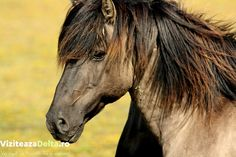 Close-up of horse Horses and humans secure a historical connection. Asian ramblers no doubt domesticated the first horses some Dangerous Animals In Australia, Australia Animals, Horse Smiling, What Animal Are You, Pet Loss, Horse Photos, Animals Of The World, Nature Animals, Wild Horses