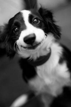 dog-aww-5