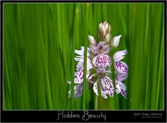 Hidden beauty #orchid #Flower