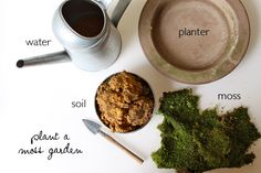 Materials to make your moss garden