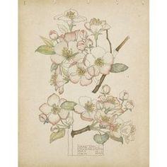 Charles Rennie Mackintosh - Crab Apple