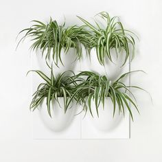 Design for Vertical Greenery by VertiPlants Plant Wall, Plant Decor, Gift For Architect, Office Plants, Pot Sets, Flower Wall, Potted Plants, Container Gardening, Bricolage