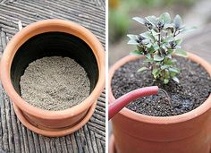 Acredite: 70% do sucesso da horta deve-se ao preparo do solo. Em canteiros, caixas ou vasos, a terra precisa ter uma adubação equilibrada. Misture duas partes de terra comum, uma parte de composto orgânico (ou húmus de minhoca) e uma parte de areia. o canteiro não pode ter pedras e o solo deve estar bem fofo para que as pequenas raízes encontrem caminho livre para crescer.