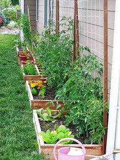 Container garden-Note the wall of food gardening, the tomatoes are on the trellis. Use indeterminate tomatoes for the trellis because they are the ones that grow large. #largevegetablegardeningideas