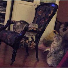 На днях в закромах нашли неопубликованный фотоотзывНа фото кресло, которое ранее радовало своей красотой в нашем шоу-руме, а теперь красуется в интерьере нашей покупательницы из Самары и уже полюбилось домочадцами #буфеттабурет #bufettaburet #мебель #антиквариат #винтаж #необычнаямебель #красиваямебель #старина #красота #стариннаямебель #предметыинтерьера #дизайнинтерьера #дизайн #интерьер #спб #мск #москва #питер #осень #октябрь #порусски #любовь #design #vintage #love #interior