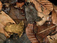 Camouflage – die Kunst der Tarnung » Hilftdirweiter.de
