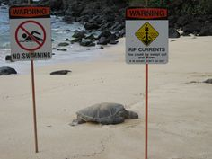Turtle Beach - North Shore - Oahu - Hawaii  Me and Kendra would go swimming anyways.... Hahaha snorkelling with the turtles against the rules!