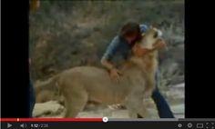 Christian era un cucciolo di leone in vendita nei grandi magazzini Harrods a Londra. Una coppia vedendolo ha deciso di comprarlo e portarlo con sè. Lo trattarono come un figlio giocando come si gioca con un comune animale domestico, fino a quando crebbe troppo e non poterono più tenerlo. Cosa[...]