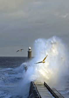 Tynemouth North Pier Priory Lighthouse and Storm Bird | by bill.f