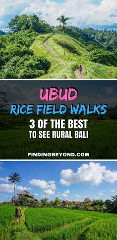 For something free to do in Ubud, Bali, go on an Ubud rice fields walk. In this post, we share our 3 favourite easy Ubud walks to see rural Bali. | Self Guided walks in Ubud | DIY walks in Ubud | Best activities in Ubud | Ubud Highlights | Best of Ubud | Backpacking Bali | Bali on a Budget | What to do in Ubud | Top things to do in Ubud |