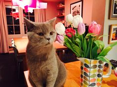 Flowers and cat - atishoo!