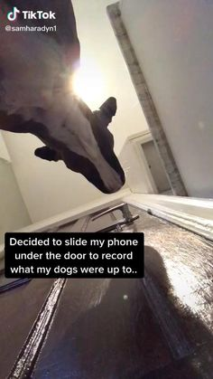 Funny Animal Jokes, Funny Animal Pictures, Animal Memes, Funny Jokes, Cute Funny Dogs, Cute Funny Animals, Cute Dogs And Puppies, Doggies, Baby Dogs