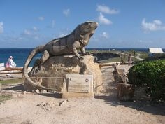 Iguana - Cliff of the Dawn - This is the Easternmost point in Mexico #Animal #Sea