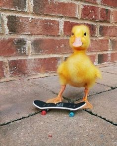 Baby Animals Super Cute, Cute Little Animals, Cute Funny Animals, Funny Birds, Baby Animals Pictures, Cute Animal Pictures, Animals And Pets, Animal Pics, Funny Pictures