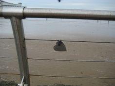 Weston-super-Mare - Beachfront