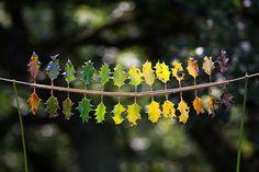 DM_Schilling_leaf spectrum