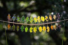 Richard Schilling's Leaf Gradient