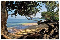 Anini Beach, Kauai  By: Richard Armstrong  |  View Full   http://photo.net/photodb/photo?photo_id=10491231=md#  Portfolio (811 images)    Equipment: Nikon D300, SanDisk Ultra II 8GB, hoya 62mm Circular Polarizer, nikkor 18-200mm f/3.5-5.6 Nikkor AF-S IF ED DX lens