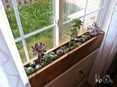 how to make a succulent window box, flowers, gardening, succulents, woodworking projects, Succulents love sun and require little water