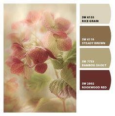 Love the Rice Grain color. Paint colors from Chip It! by Sherwin-Williams