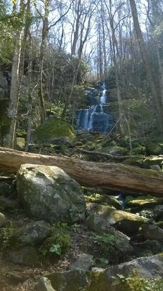 Fern Branch Falls (GSMNP) along the Porter's Creek Trail. A great family hike!