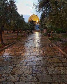 صباح يوم جديد في المسجد الأقصى المبارك #ساحات_المسجد_الاقصى #قبة_الصخرة_المشرفة #القدس_لنا #القدس_العاصمة#
