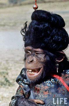 Lancelot Link, Secret Chimp, 1970-1972