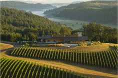 Penner Ash Winery lies between the rows of vines, Cascade Mountains and Willamette River. Oregon Travel, Travel Usa, Italy Travel, Wine Tasting Near Me, Oregon Wine Country, Sweet White Wine, Pinot Noir Wine, Willamette Valley, Cascade Mountains