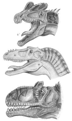 Heads of theropods 2 by *tuomaskoivurinne