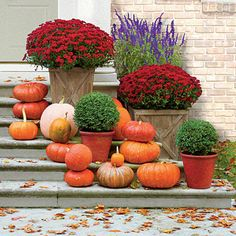 Line Your Steps    There's a reason you see mums each fall—they work. Once buds begin to open, you're guaranteed blooms whether your display is in sun or shade. To prolong the show, water when dry and remove spent flowers. Pair with Mexican sage and boxwoods for this stunning display.