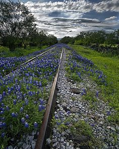 What a beautiful contrast of man vs nature. Love this photo! Llano County railroad in Texas Abandoned Train, Abandoned Places, Beautiful World, Beautiful Places, Trains, Felder, All Nature, Texas Hill Country, Blue Bonnets