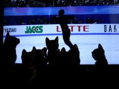 kittens entranced by ice skater