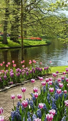 Outdoors Discover A lovely Spring garden plants hyacinths with tulips in fall Beautiful Landscapes Beautiful Gardens Beautiful World Beautiful Flowers Beautiful Places Beautiful Pictures Beautiful Scenery Stunningly Beautiful Love Garden