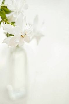 """ Flores brancas… """