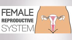 What is the Female Reproductive System - The Naked Truth | Her Body