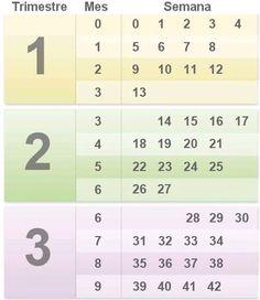 4c8f01f17 calendario del embarazo por mes y semanas. - Embarazadas primerizas