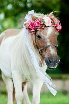 Berry colored August wedding in Dresden - Hochzeitswahn - - Beerenfarbige Augusthochzeit in Dresden Berry colored August wedding in Dresden by timjudi photography Most Beautiful Horses, Pretty Horses, Horse Love, Horse Girl, Animals Beautiful, Horse Photos, Horse Pictures, Horse Flowers, Mini Pony