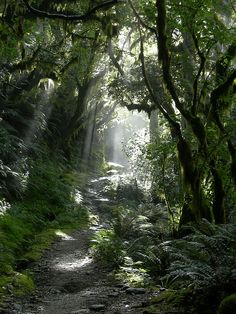 The trail on the Milford Track in Fiordland National Park, New Zealand