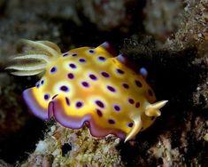 Beautiful Sea Animals   Beautiful Sea Creatures (38 pics)